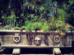 en Jardín Botánico - Histórico La Concepción