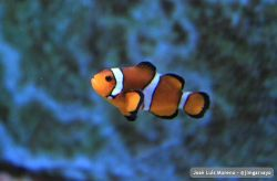 Hi #Nemo! #naturaleza #nature #sinfiltro