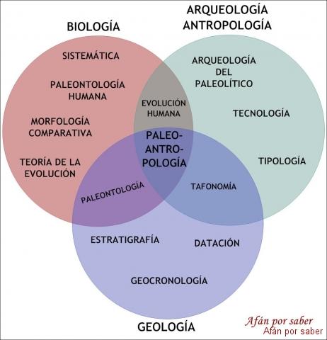 272 watermark 640x480 disciplinas Para entender la paleoantropología. 1ª parte: Los fósiles