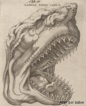 92 watermark 520x360 canis carchariae dissectum caput 001 Ilustrar la ciencia es un arte