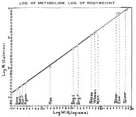 tabla kleiber nggid03340 ngg0dyn 320x240x100 00f0w011c010r110f110r010t010 Los números de la biología (y II)