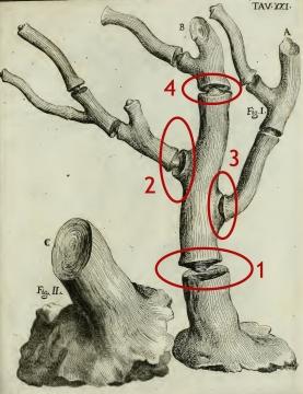 coral nggid03338 ngg0dyn 480x360x100 00f0w011c010r110f110r010t010 Para entender la paleoantropología. 2ª parte: La evolución