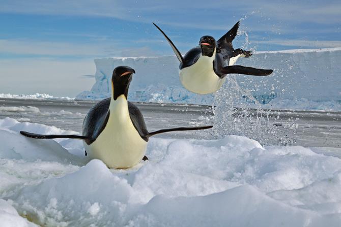 02 airborne penguin exits water 670 TORPEDOS VOLADORES