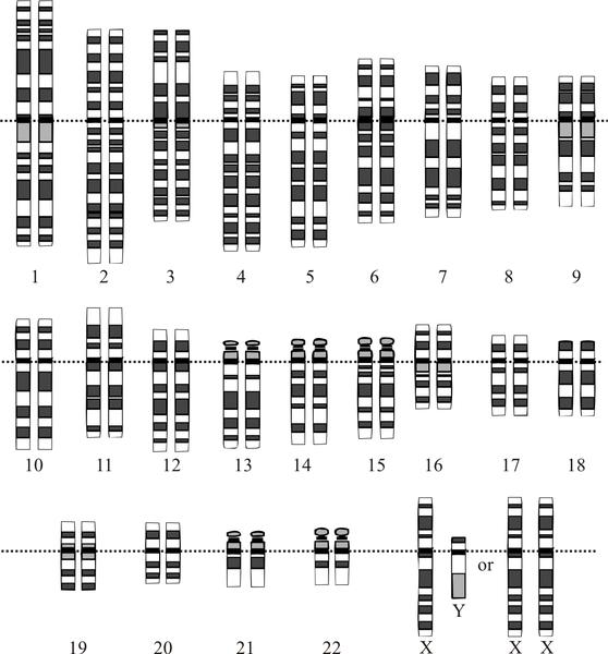 cariotipo ENCODE   Enciclopedia de los elementos del ADN