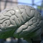 Cerebro humano Planetario Nueva York 150x150 Confía en mí, tengo una intuición... (I)