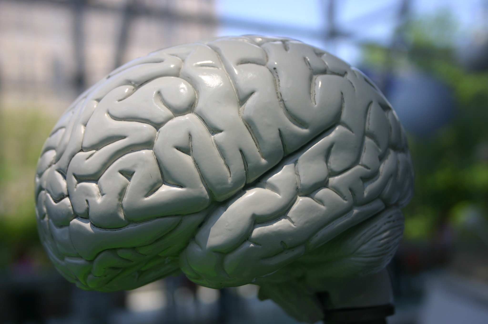 Cerebro humano Planetario Nueva York Confía en mí, tengo una intuición... (y II)