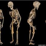 Esqueleto Hombre Elefante 150x150 Siete días ... 21 a 27 de octubre