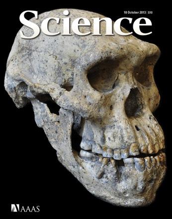 Portada revista Science 18 octubre 2013 Para entender la paleoantropología. 1ª parte: Los fósiles