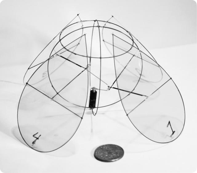 medusa voladora Siete días ... 25 de noviembre a 1 de diciembre
