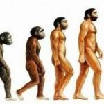 evolucion humana 150x150 Los números de la biología (I)