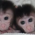 macacos 150x150 Siete días ... 9 a 15 de septiembre