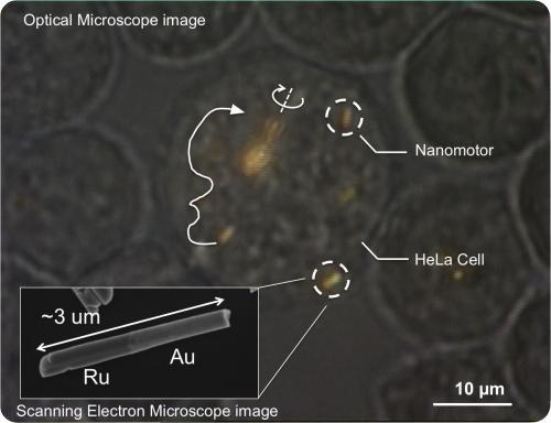 nanomotors Siete días ... 10 a 16 de febrero