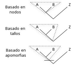 tipos de clados Para entender la paleoantropología. 2ª parte: La evolución