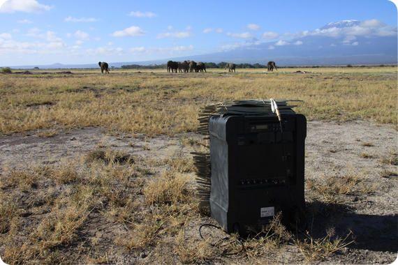 elefantes Siete días ... 10 a 16 de marzo