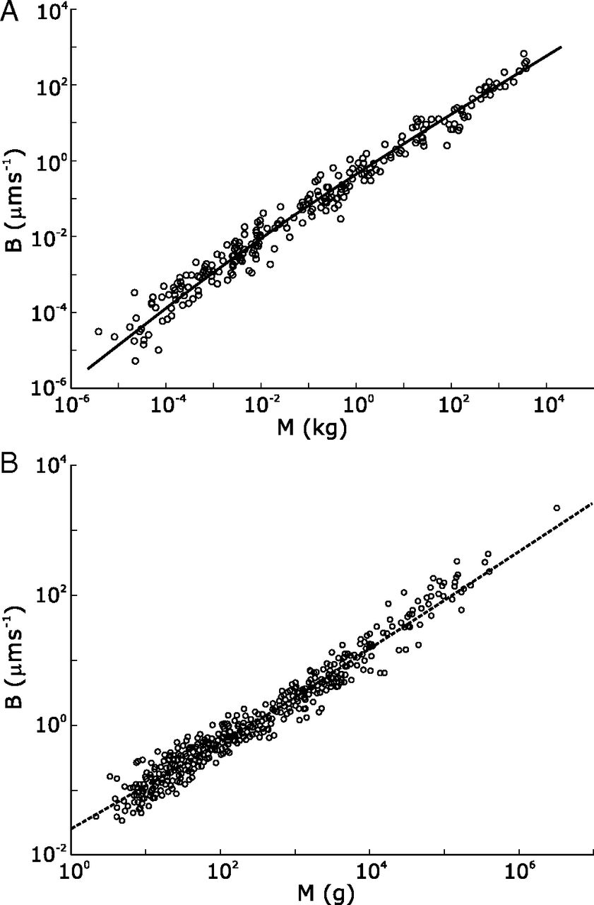Aniamles y plantas Los números de la biología (y II)