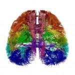Cerebro 150x150 Siete días ... 17 a 23 de marzo